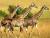 Adventure East Africa - Image 8